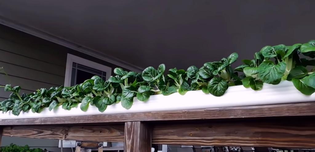 outdoor hydroponics garden setup